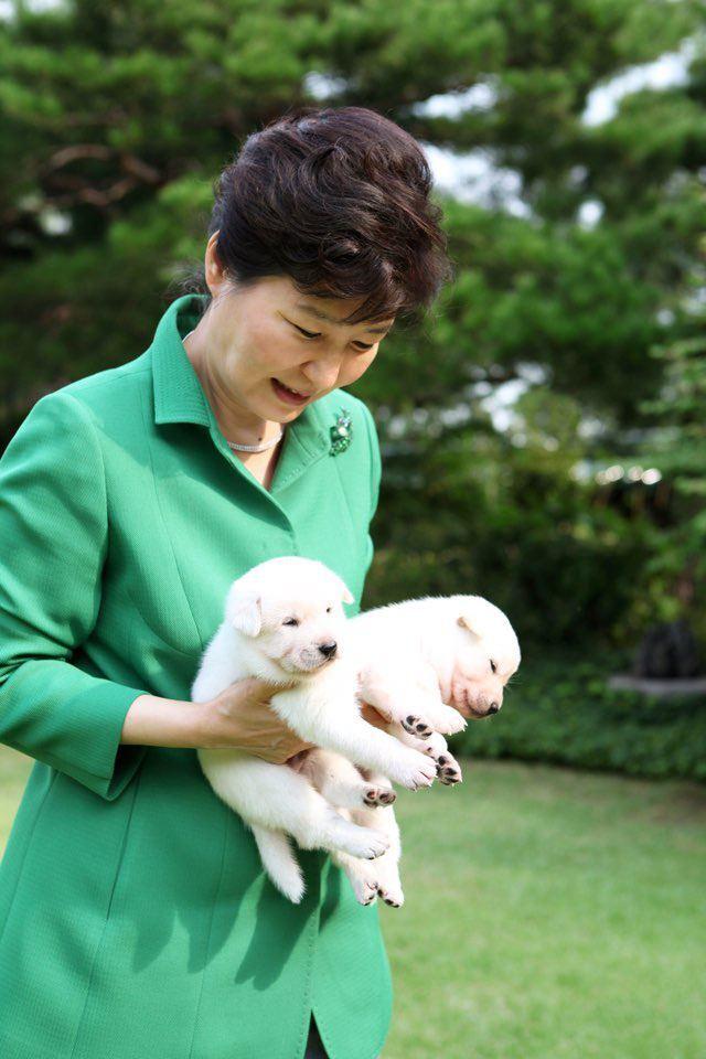지난 2015년 박근혜 전 대통령이 대통령 취임식 때 선물 받은 진돗개 희망이와 새롬이가 낳은 새끼들을 안고 있다. 연합뉴스