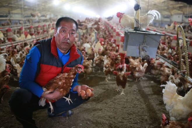 지난 20일 전북 익산시 망성면 참사랑 동물복지 농장에서 임희춘씨(49)가 살처분을 거부한 닭과 출하가 금지된 계란을 들고 있다. 익산/남종영 기자