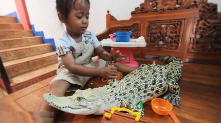 악어와 친구 삼은 인도네시아 세 살짜리 여아 모습(유튜브 영상 캡처)