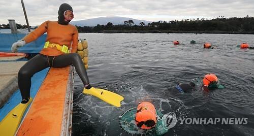 바다로 뛰어드는 제주 해녀      (서귀포=연합뉴스) 박지호 기자 = 지난 25일 제주 서귀포시 쇠소깍 앞바다에서 하례리 어촌계 해녀가 해산물을 채취하기 위해 바다에 뛰어들고 있다.