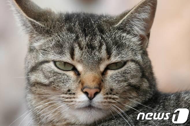 고양이.(사진 이미지투데이)© News1