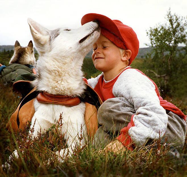 시베리안허스키와 노는 아이. 개의 놀이 행동은 사람이 반려동물로 육종하는 과정에서 생겨난 행동이라는 주장도 있다.  제이 퍼홀스/위키미디어 코먼스 제공
