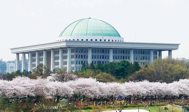 국회의사당 벚꽃