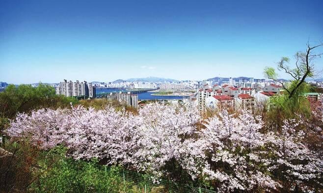 고구동산 벚꽃길