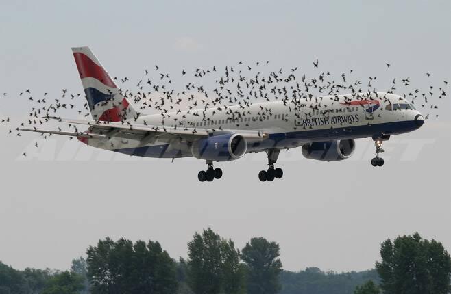 비행기 주변에 새 떼가 몰려있다. 자칫 새가 엔진에 빨려 들어가면 큰 사고로 이어진다. [중앙포토]