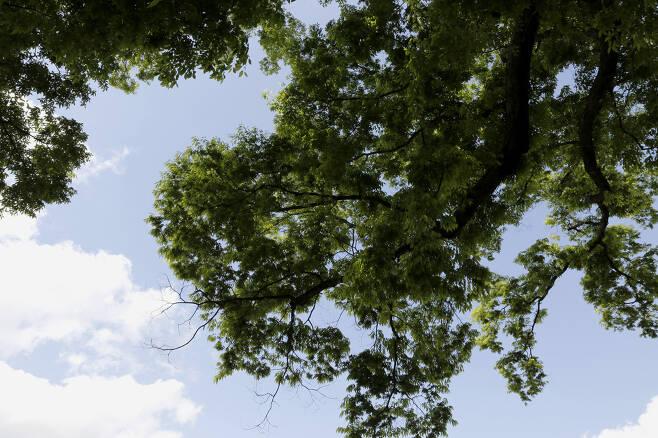 봄햇살에 초록으로 물들어가는 느티나무 가지. 학교 학생들은 물론 마을주민들까지 모두 품어준다. 그 모습은 사계절 언제라도 변함이 없다.  ⓒ이돈삼