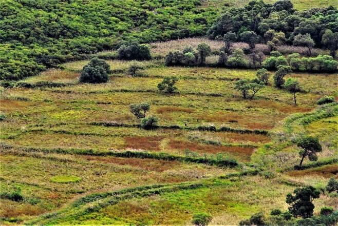 서부와 중부 디엠제트에는 과거 농경지와 마을이었던 곳이 사람의 손길이 닿지 않으면서 자연지역으로 변한 곳이 많다. 철원의 디엠제트 내부에서 발견한 모습이다. 60년 전 농경지 원형이 그대로 간직돼 있다.