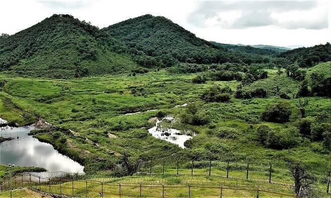파주 세월천의 습지 모습이다. 서부전선은 곳곳에 습지가 자리잡고 있다.