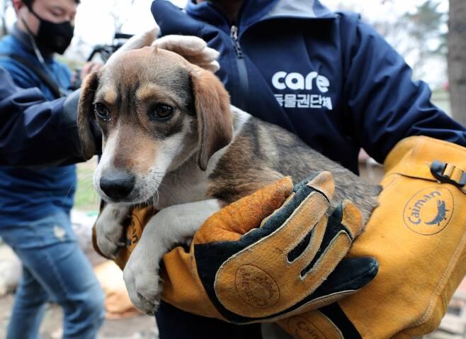 동물보호단체 케어 활동가들이 10일 오후 경기도 남양주시의 한 식용견 농장에서 구조된 식용견을 어루만지고 있다./사진=뉴스1