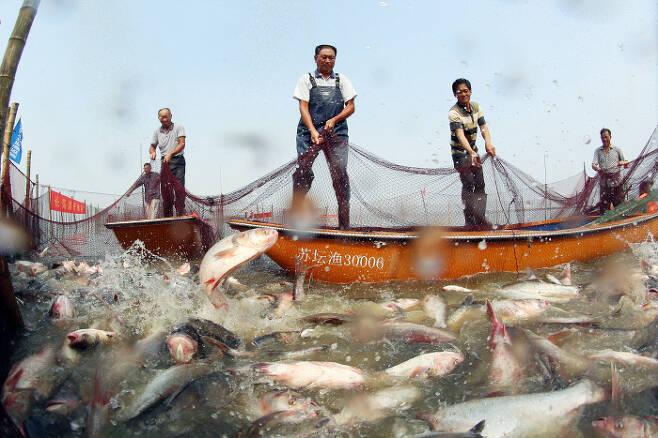 중국 장쑤성 창저우의 한 호수 위에서 어민들이 지난 15일(현지시간) 에서 물고기가 가득 잡힌 그물을 끌어올리고 있다.  창저우|신화연합뉴스