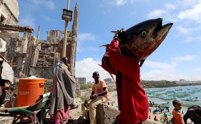 소말리아의 한 어민이 지난 14일(현지시간) 수도 모가디슈 인근의 해안에서 잡은 대형 물고기를 짊어지고 있다. 모가디슈|로이터연합뉴스