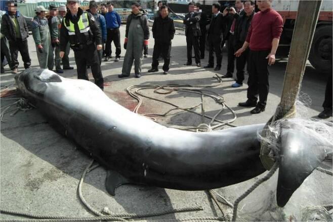밍크고래 혼획(사진=목포해양경찰서 제공)