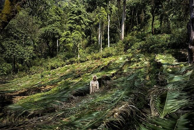 커피종 보존을 위해 마련된 에티오피아의 '커피 나무 보육원'의 모습네이처 제공