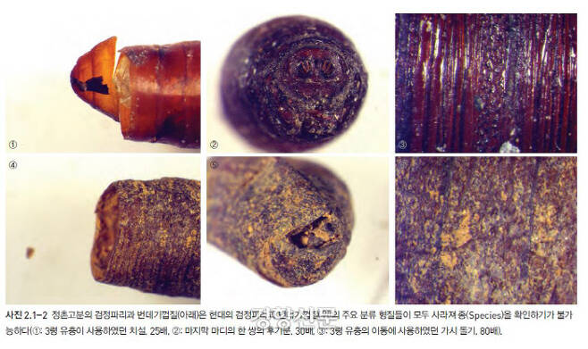 정촌고분에서 확인된 파리번데기 껍질. 그러나 주요 형질이 모두 사라져 종을 확인하기는 불가능하다. |국립나주문화재연구소 제공
