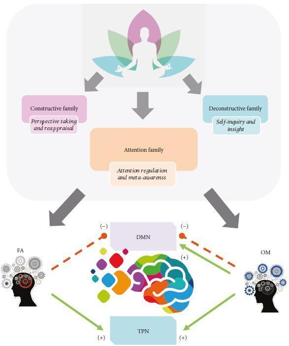 명상은 마음의 조절 능력을 높이는 정신 훈련이다. 명상은 여러 형태가 있는데 특히 집중명상(FA)과 마음챙김명상(OM)이 디폴트 모드 네트워크(DMN)를 억제하고 과제 관련 네트워크(TPN)를 활성화시켜 신경 활동이 안정적이고 효율적으로 이뤄질 수 있게 만들어 준다. ′신경 가소성′ 제공