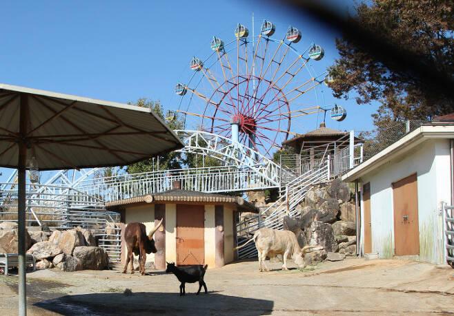 진주동물원 동물사 바로 옆의 놀이기구 모습.  동물들이  소음에 지속적으로 노출된 상태다.