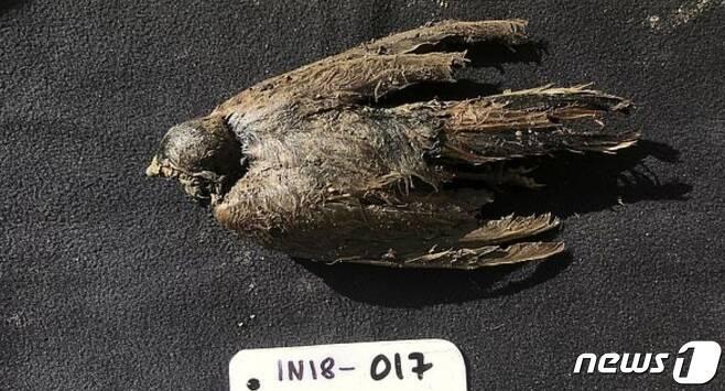 해변 종다리로 추정되는 4만6000년전 아이스버드. (커뮤니케이션스 바이올로지 저널)© 뉴스1