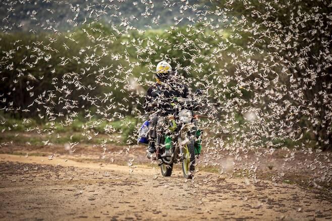 케냐의 한 마을에서 촬영된 메뚜기떼. 사진=AP 연합뉴스