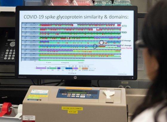 미국 메릴랜드주의 백신 개발회사 노바백스 연구소에서 한 연구원이 컴퓨터로 가능성 있는 백신의 단백질 구조를 살펴보고 있다. [AFP=연합뉴스]