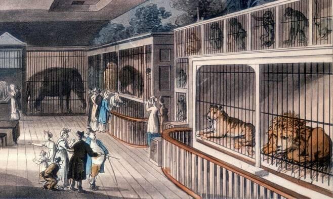 1820년 런던 왕실 동물 수집관. 작자 미상.