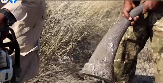 전기톱으로 코뿔소 뿔을 자른 장면 [보츠와나 환경·천연자원·보전·관광부 페이스북 캡처, 재판매 및 DB 금지]