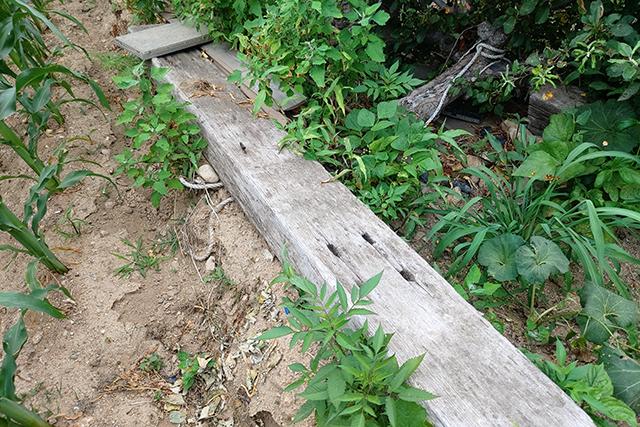 ▲낙산사역 터에서 발견한 침목 ⓒ프레시안(조성은)