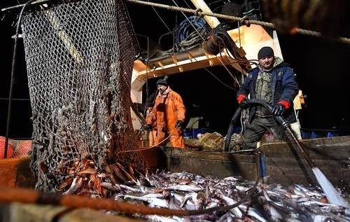 러시아 극동해역에서 조업중인 명태잡이 어선의 모습. [타스=연합뉴스]