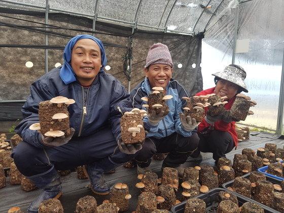 2016년 입국한 외국인 계절 근로자들이 농가 일손을 돕는 모습. 기사와 직접적인 관계는 없음. [중앙포토]