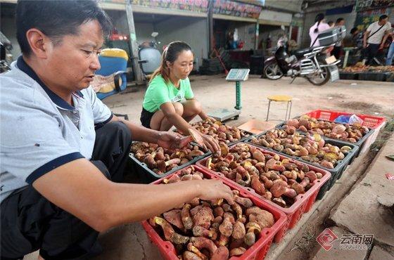 중국 윈난성 주민들이 따낸 버섯을 시장에서 파는 모습 [윈난망 트위터 캡처]