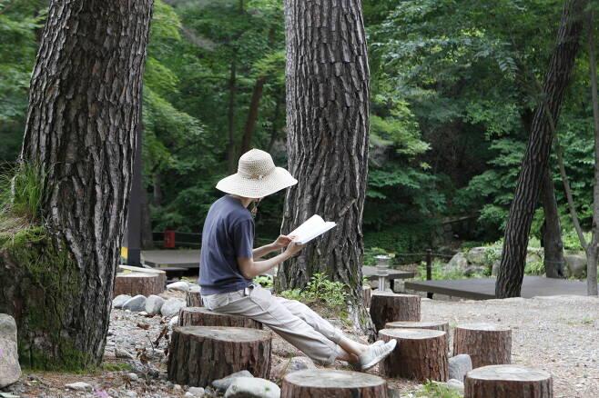 금강송 아래에서 책을 읽고 있는 모습.