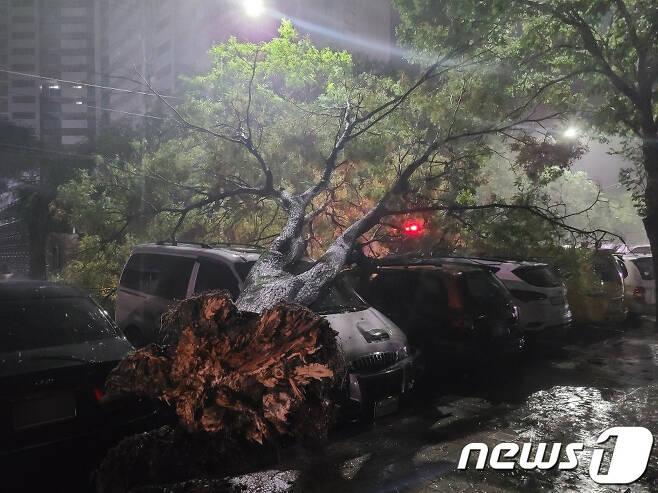 3일 오전 대구를 강타한 제9호 태풍 '마이삭'의 영향으로 달서구 도원동 가로수가 쓰러지며 차량을 덮쳤다. (대구소방안전본부 제공) 2020.9.3/뉴스1 © News1 공정식 기자