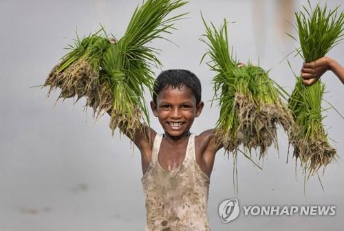 인도 프라야그라지에서 농사일을 돕는 어린이. [AP=연합뉴스]