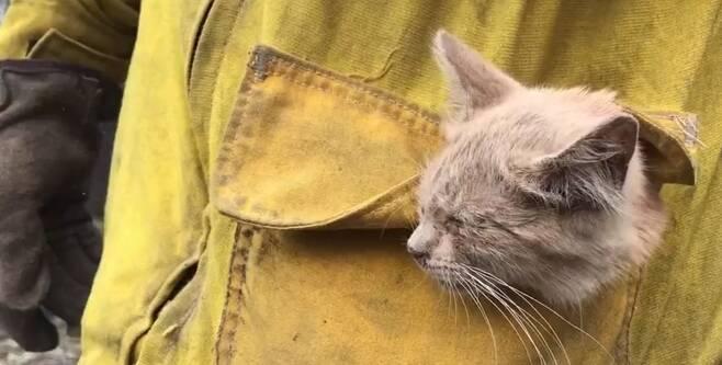 캘리포니아주 화재 지역에서 구조된 새끼고양이 [대니얼 트레비조 소방관]