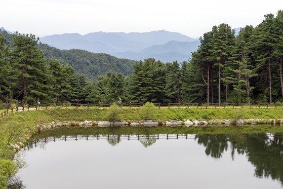 가평 잣향기푸른숲 언덕에 자리한 물막이 둑. 잣나무 숲을 거닐다 잠시 쉬어가기 좋은 장소다.