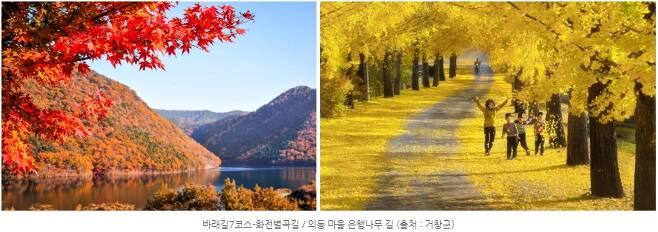 바래길7코스-화전별곡길 / 의동 마을 은행나무 길 (출처 : 거창군)