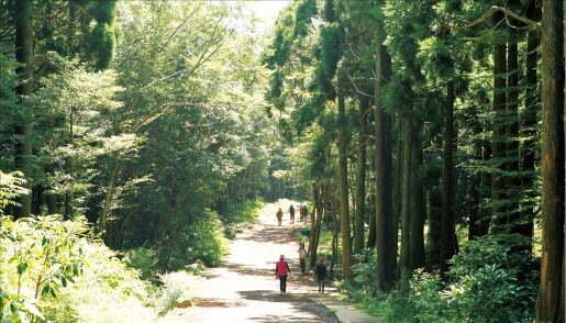 서귀포 치유의 숲