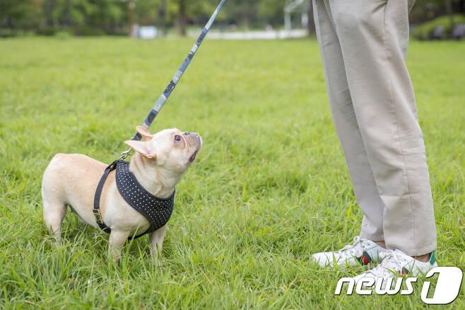 목줄을 차고 산책 나온 반려견. (자료사진) © News1 © News1