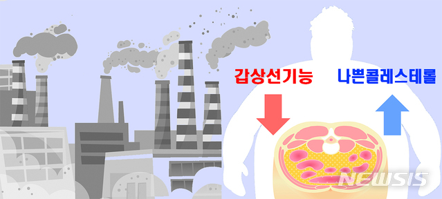 [서울=뉴시스] 비만이고 배가 나온 사람이 오염된 공기에 노출되면 갑상선 호르몬이 부족해져 갑상선 기능이 저하되고, 혈관에 염증을 일으켜 심근경색·뇌졸중 등 혈관질환을 일으키는 나쁜 콜레스테롤도 늘어난다는 연구 결과가 나왔다. (사진= 서울대병원 제공) photo@newsis.com