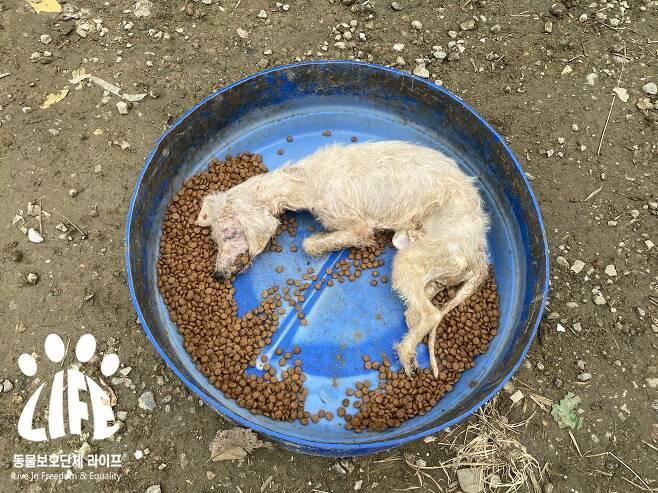 추운 날씨에 굶어 죽은 강아지가 사료통에서 발견됐다