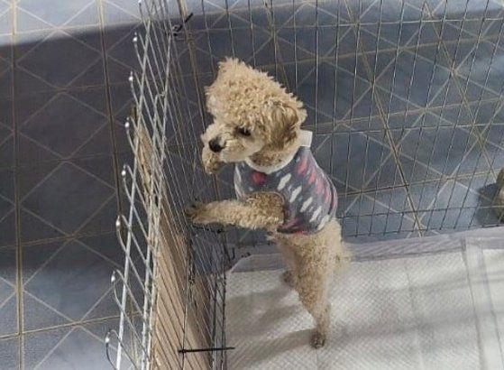 지난달 28일 경북 포항시에서 학대 피해를 입은 강아지. 캣치독인스타그램