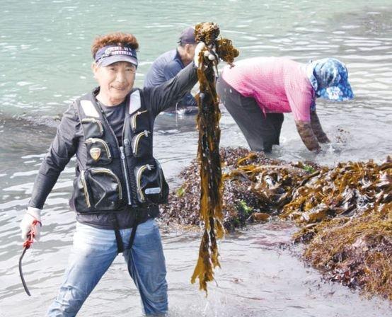 동·서 거차도 주민이 채취한 자연산 돌미역을 들어 보이고 있다. 프리랜서 장정필
