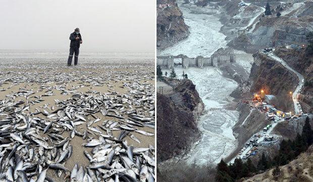 기후변화로 지구 곳곳이 몸살이다. 3일 칠레에서는 지구온난화로 인한 생태변화로 정어리 수천 마리가 떼로 죽었고, 7일에는 무너진 빙하가 인도의 한 마을을 덮쳐 수백 명이 실종됐다./사진=로이터, EPA 연합뉴스