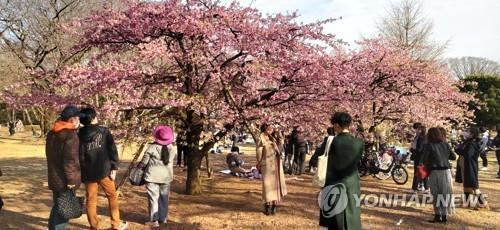 (도쿄=연합뉴스) 나루히토(德仁) 일왕 생일로 공휴일인 23일 오후 도쿄 요요기(代代木)공원에서 상춘객들이 꽃망울을 터뜨린 벚나무 주변에 몰려 있다.