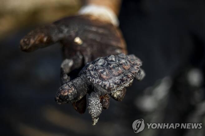 20일(현지시간) 한 바다거북이 해양 기름유출 사고가 발생한 이스라엘 지중해변에서 타르를 뒤집어쓴 채 죽어 있다. [AP=연합뉴스]