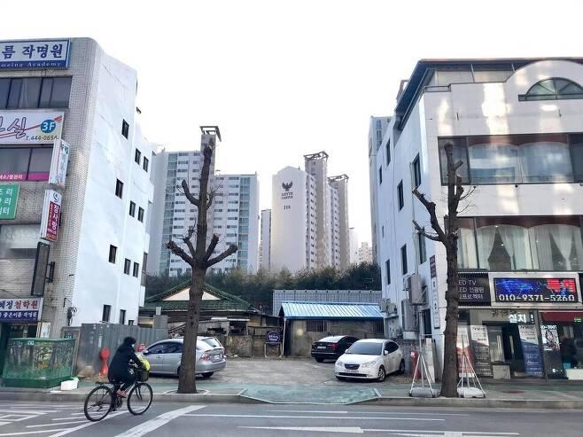 경북 구미 금오산네거리 부근 가로수들.