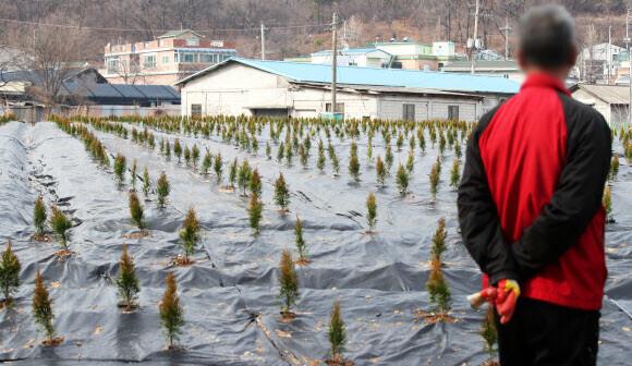한국토지주택공사(LH) 직원들의 투기 의혹이 제기된 경기도 시흥시 과림동의 한 밭에 묘목들이 심겨 있다. 연합뉴스