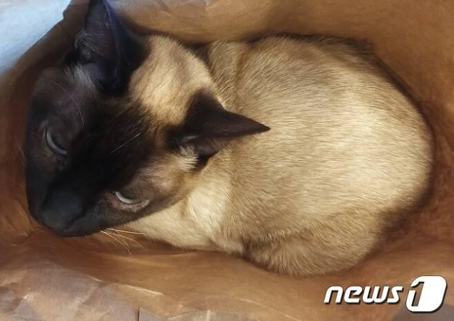 쇼핑백에 담겨 버려진 고양이. 사진 유기견새삶 제공 © 뉴스1