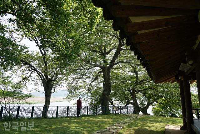 식영정 주변의 오래된 푸조나무, 팽나무, 감나무가 아늑하고 여유로운 정취를 더한다.
