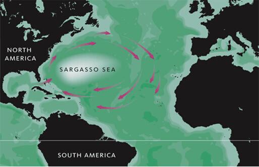 대규모 소용돌이 바다인 사르가소해 위치. 서쪽 끝이 버뮤다 삼각지대이다. 위키미디어 코먼스 제공