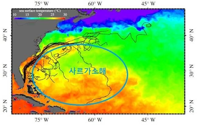 푸른바다거북의 이동 경로. 멕시코만류를 따라 북상하다 상당수가 조류를 벗어나 사르가소해로 향한 궤적을 볼 수 있다. 맨스필드 외 (2021) '왕립학회보 비' 제공
